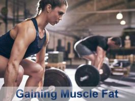 Gaining Muscle Fat