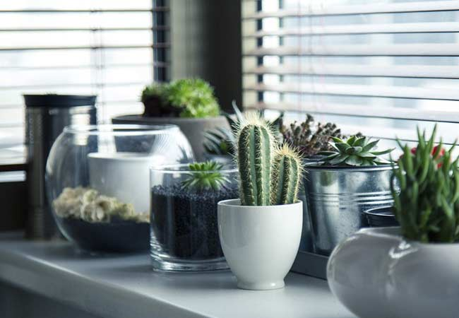 Shelves with potted plants