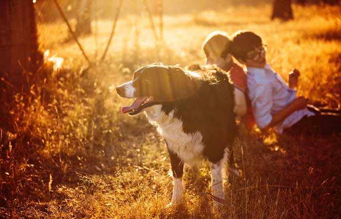 Responsibility Through Pet Ownership