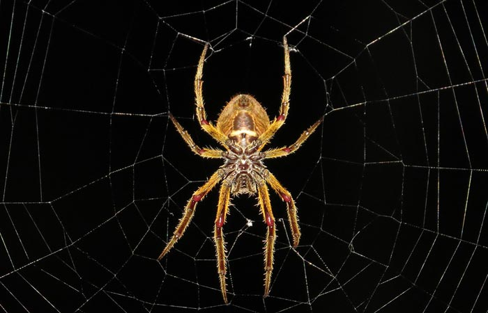 11 Interesting Facts About Spiders You Should Know