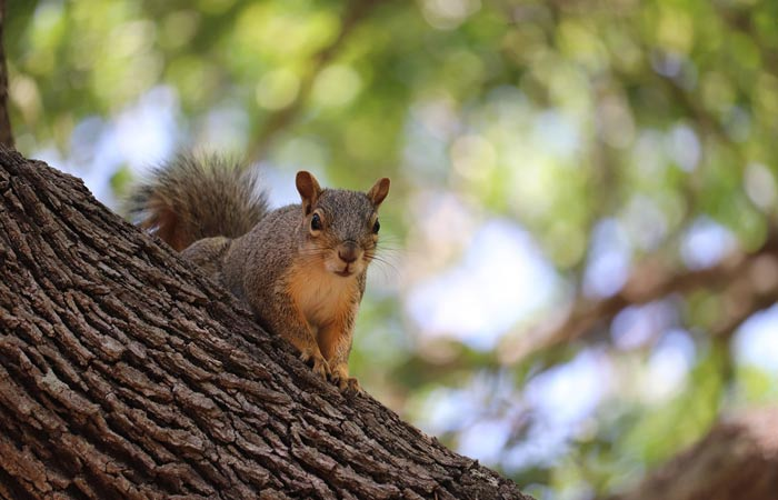 Keeping the Darn Squirrels Away From Your Backyard Bird Feeder